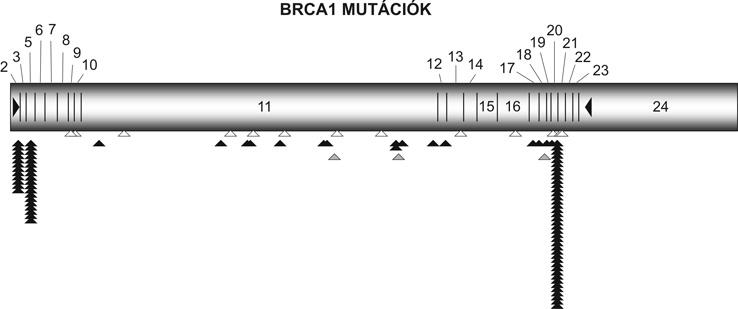 rák genetikai diszkrimináció