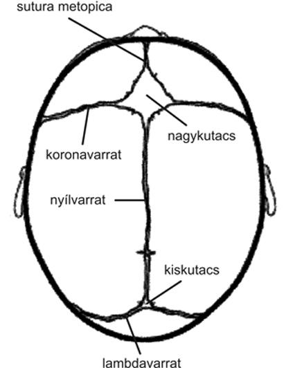 a koponya ízületeinek kezelése)